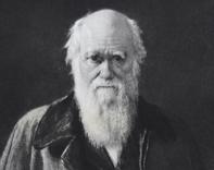 Etching of Charles Darwin