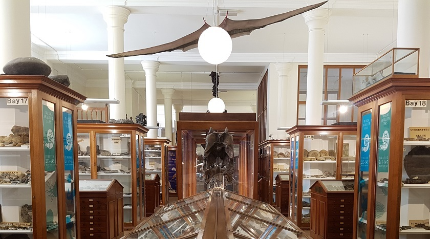 Sedgwick Museum gallery with pterosaur