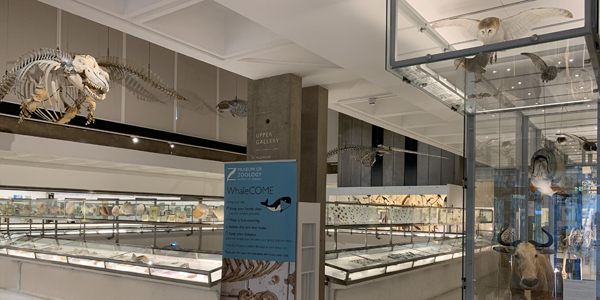 Museum of Zoology galleries