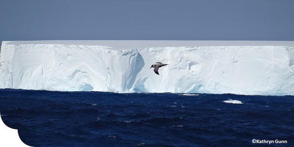 Antarctica, image by Kathryn Gunn