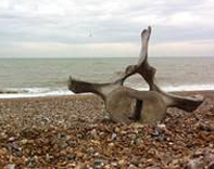 Fin Whale vertebrae on Pevensey Beach