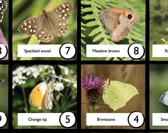 A grid of butterflies