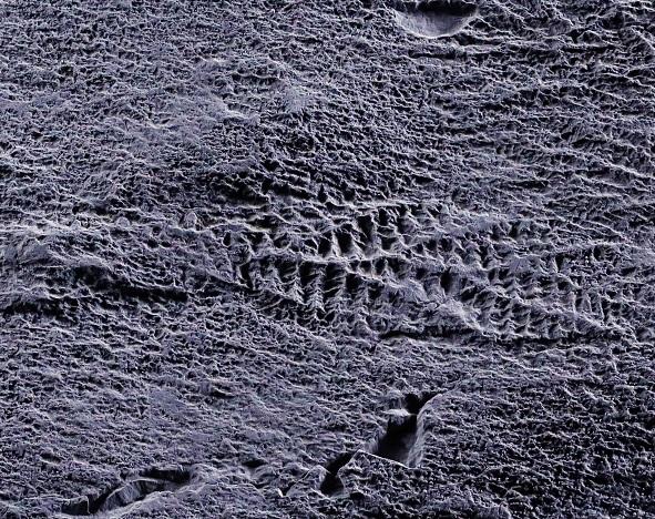 Fossilised ediacaran fronds