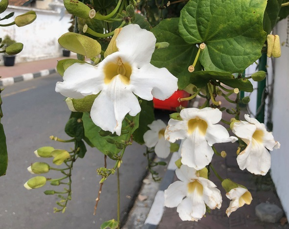 Pictures of flowers in Java last summer when Nick vistied