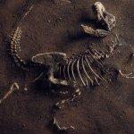 Dinosaur Fossil (Tyrannosaurus Rex)