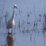 Bird on water