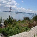 Te Atatu Peninsula Boardwalk with flax and a city