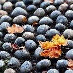 Autumn cobbles