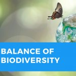 Balance of Biodiversity with a small globe and butterfly