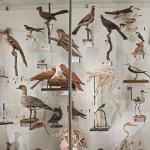 A museum case of birds