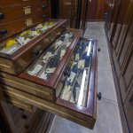 Collections at the Museum of Zoology