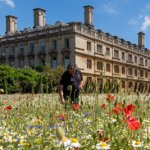 King's College wild flower meadow
