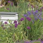 Flowers in the Botanic Garden