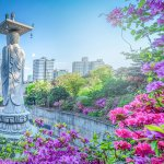 Bongeunsa Temple During the Summer in the Gangnam District of Seoul