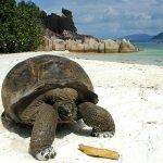 Giant tortoise on beach