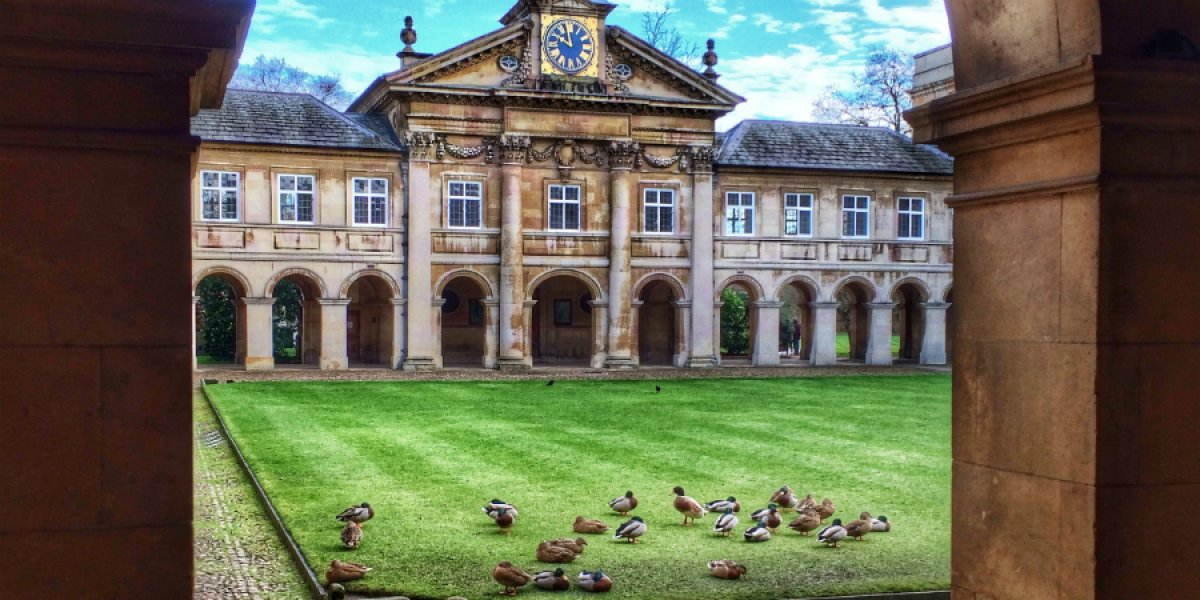 Ducks at Emmanuel College by Sir Cam