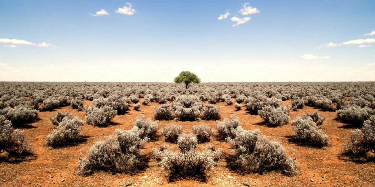 Photo of outback