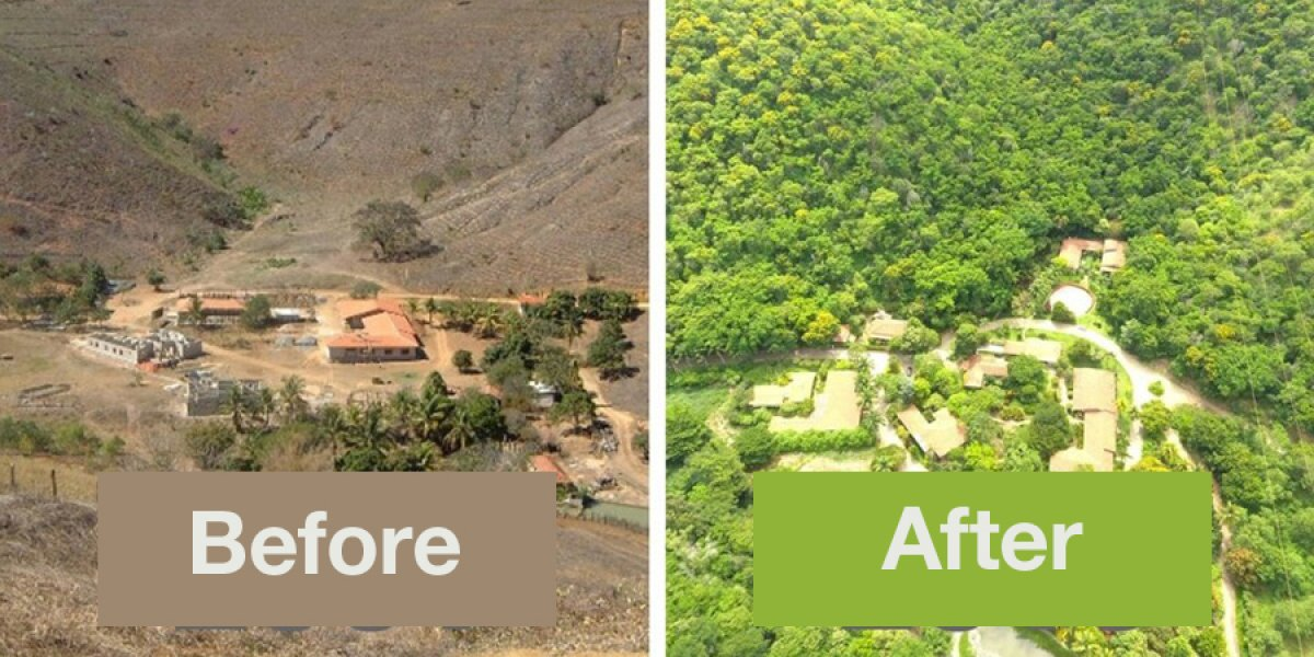 Before and after shots of the now thriving rainforest in the Minas Gerais region