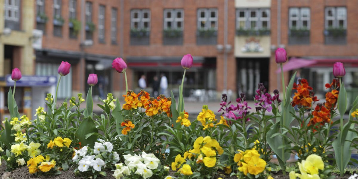 Quayside, Cambridge and tulips at Magdalene