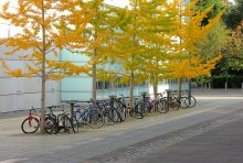 Faculty of Law bikes
